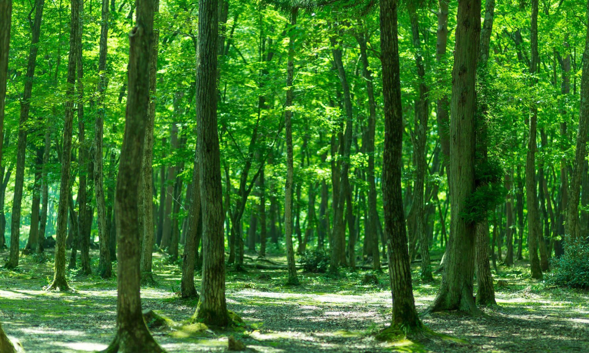 森の五重奏団/森の合奏団